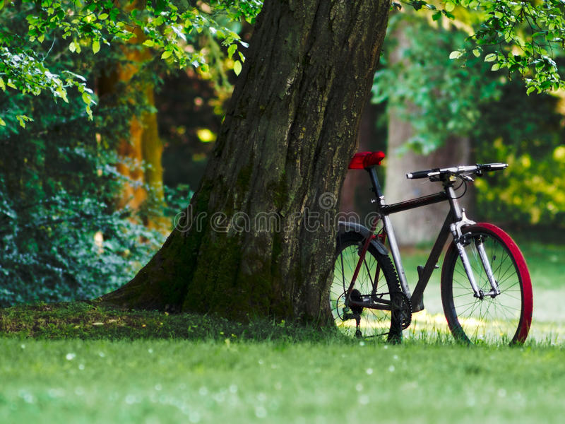 Bicycle in a green park royalty free stock photo