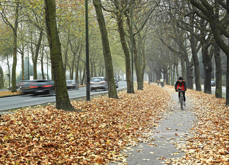 Bicycle path in Brussels