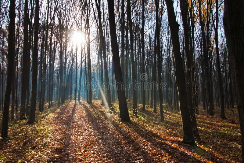 Bicycle pathway track covered with fallen leaves on a beautiful early misty late autumn morning, empty forest enjoy first sun rays royalty free stock photography