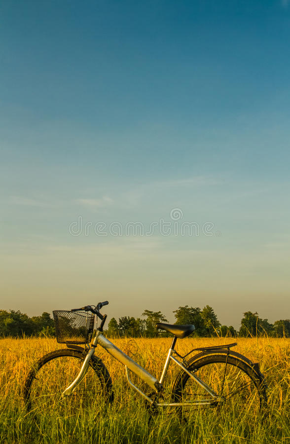 Bicycle in the rice field royalty free stock photo