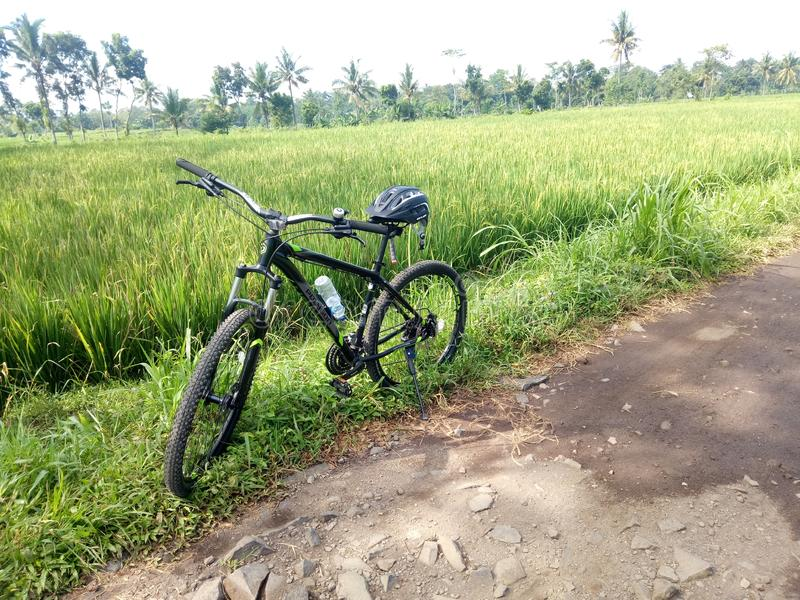 bicycle and rice field landscape royalty free stock photography