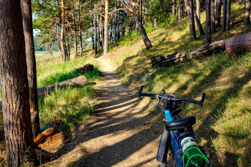 Bicycle ride on a beautiful forest path in summer stock photos