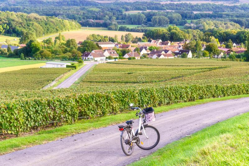 Bicycle on the road on row vine green grape in champagne vineyards at montagne de reims countryside village background stock images