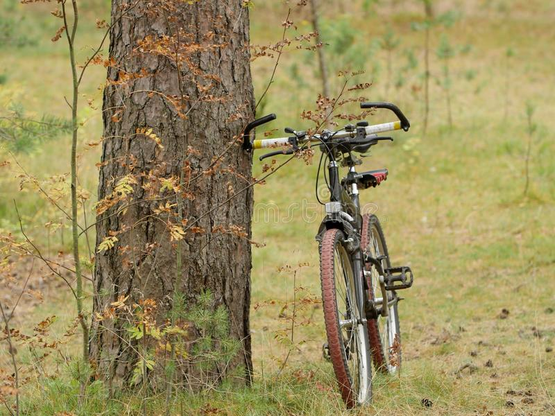 Bicycle travel autumn stock photography