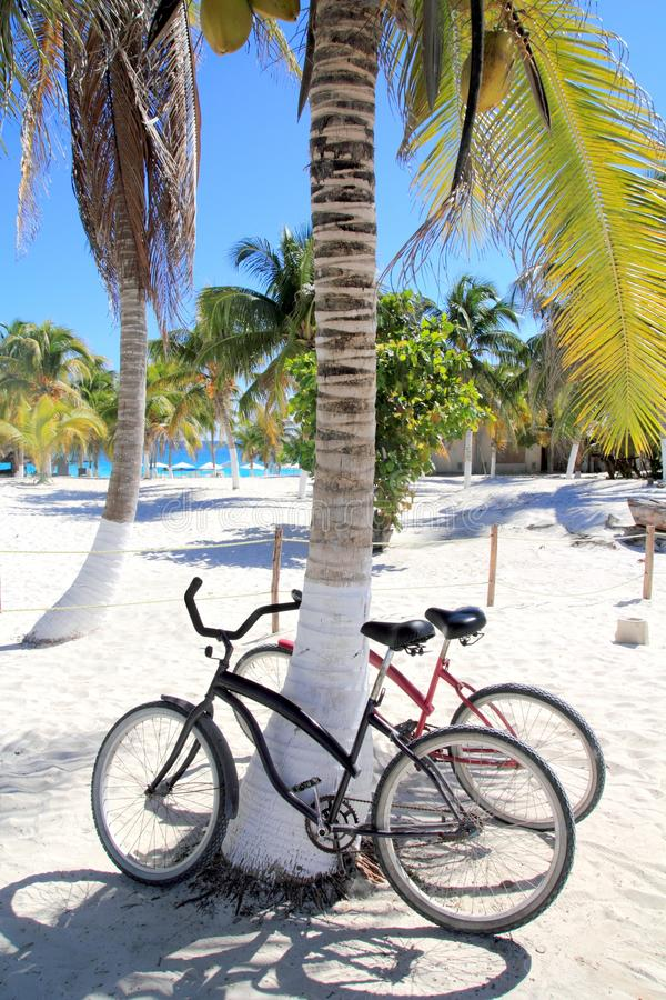 Bicycles bike on coconut palm tree caribbean beach royalty free stock image