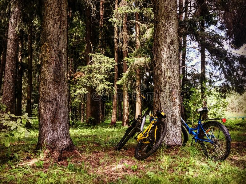 Bicycles in the forest stock photo
