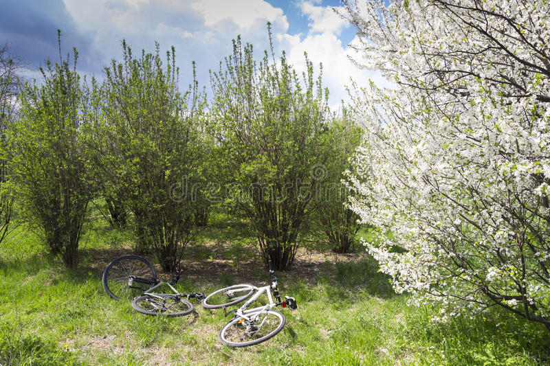 Download Bicycles in nature stock photo. Image of colours, grass - 30442306