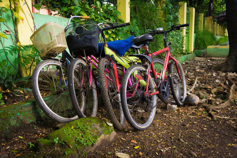 Bicycles parked under the tree photo taken in Depok Indonesia. Java royalty free stock photography
