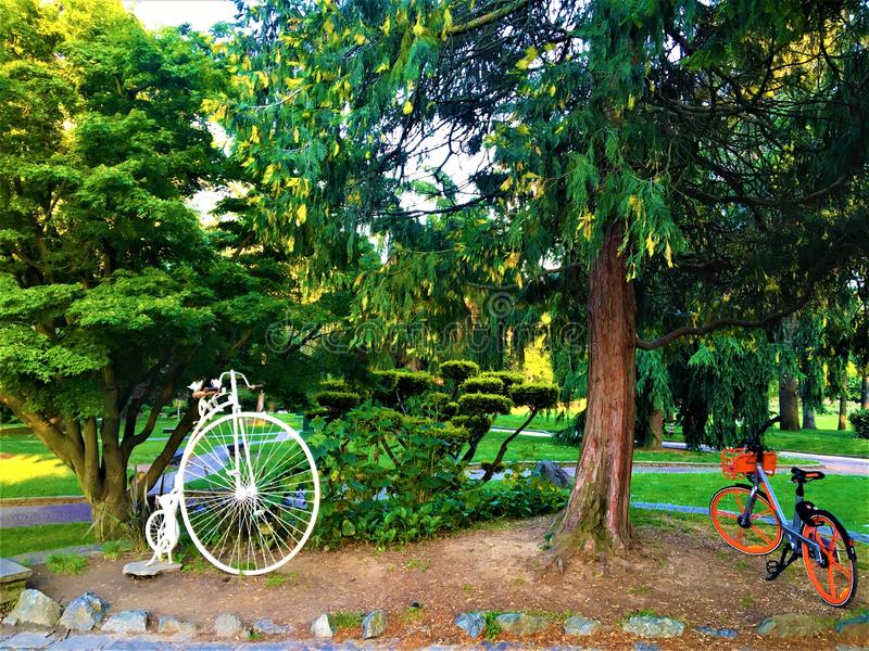 Bicycles, trees, Valentine Park and healthy life in Turin city, Italy. Ray of light, evanescence, luminescence, sports, enjoy and discover the beauty of the stock images