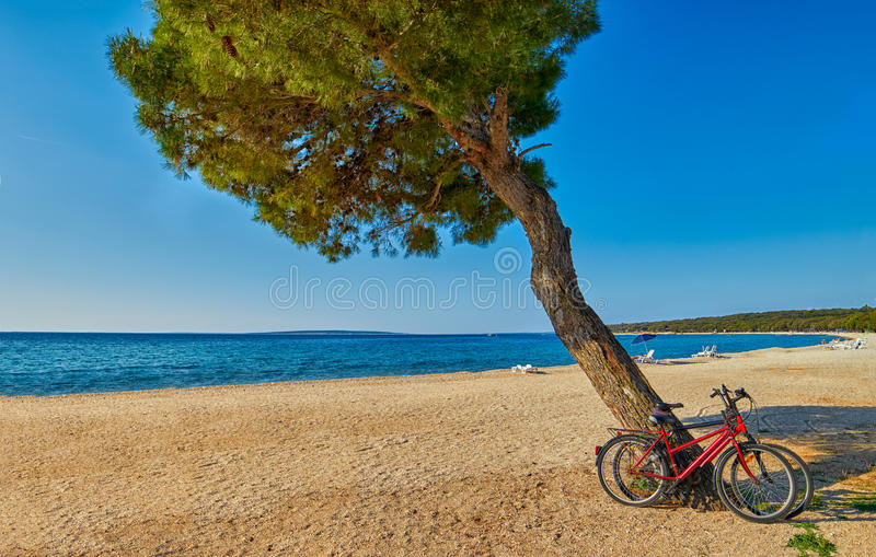 Bicycles under the pine tree on a beach stock photography
