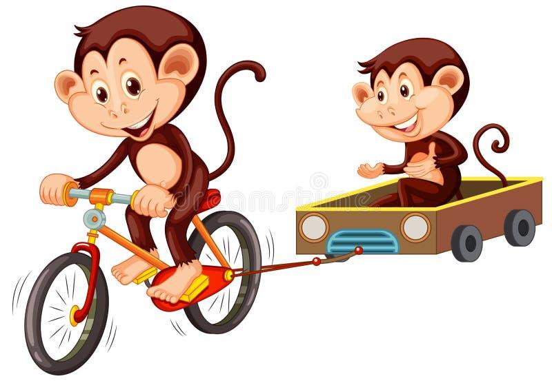 Bicyclette d'équitation de singe sur le fond blanc illustration libre de droits