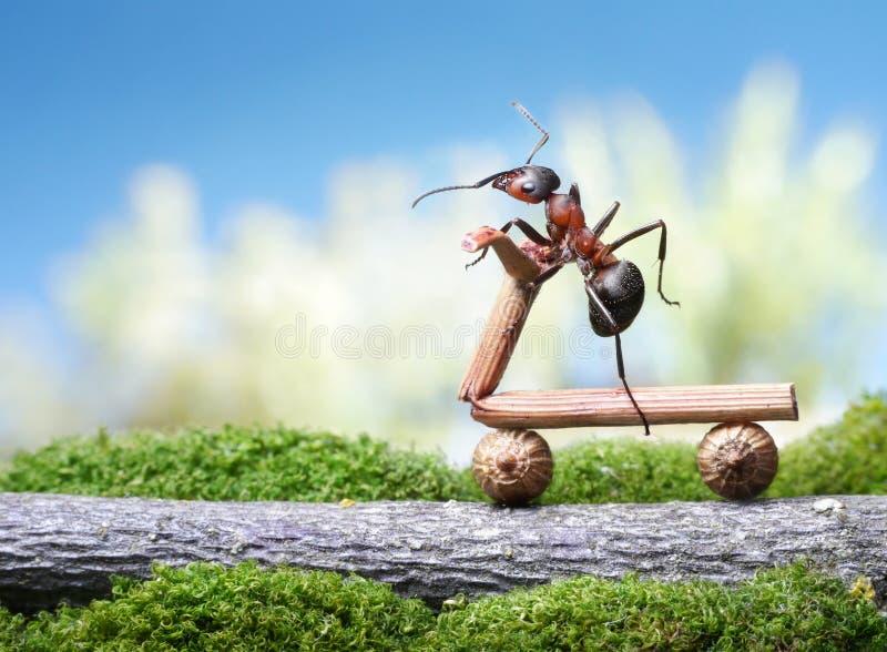 Bicyclette de fourmis image libre de droits