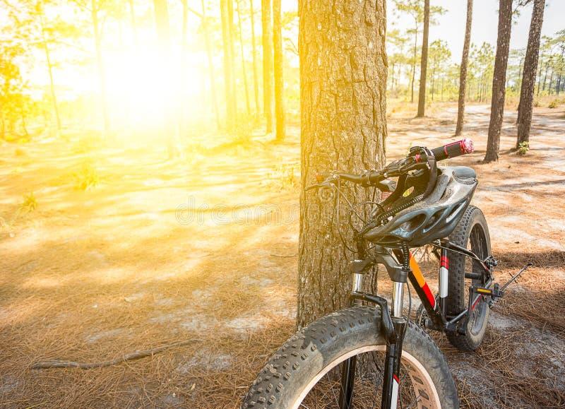 Bicyclette de montagne se penchant contre l'arbre photographie stock