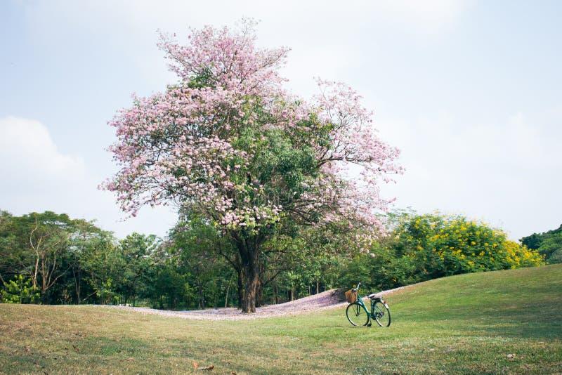 Bicyclette ou vélo en parc image stock