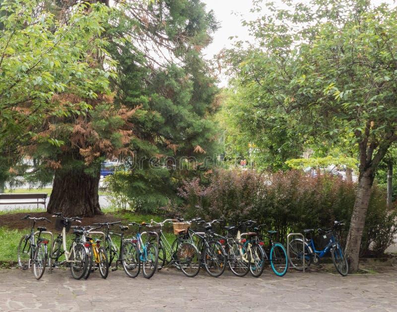 BICYCLETTES GARÉES SOUS LES ARBRES FEUILLUS photos stock