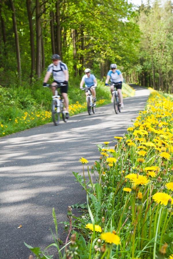 Bicycling do grupo de pessoas fotografia de stock royalty free