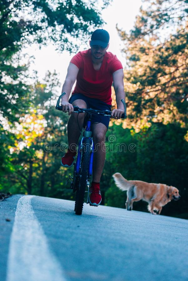 Bicyclist biker rijdt zijn fiets in de natuur terwijl hij vergezeld ging van zijn hond en een gouden rector royalty-vrije stock foto