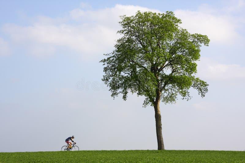 Bicyclist que passa uma árvore só imagens de stock