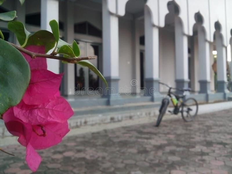 Bicykl przy meczetem zdjęcia royalty free