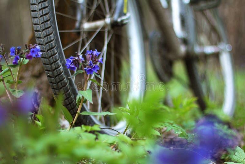 Bicykl stoi drzewem w lesie fotografia royalty free