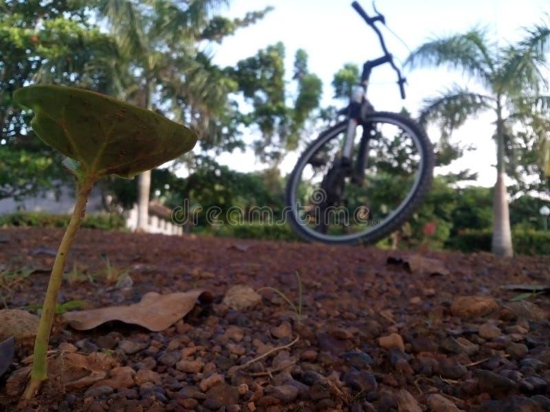 Bicykl z rośliną zdjęcie stock