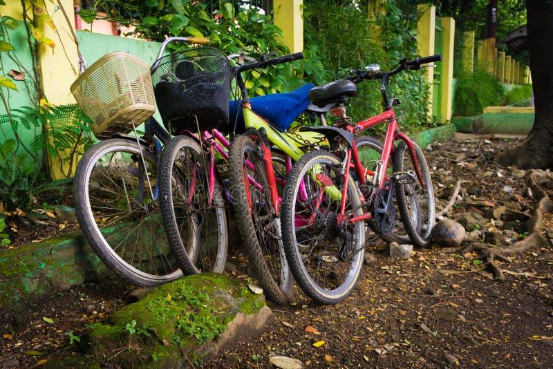 Bicykle parkujący pod drzewną fotografią brać w Depok Indonezja fotografia royalty free