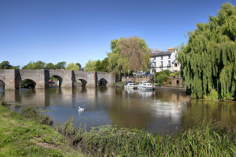 Bidford on Avon. Swans on the river at Bidford on Avon, Warwickshire, England stock photography