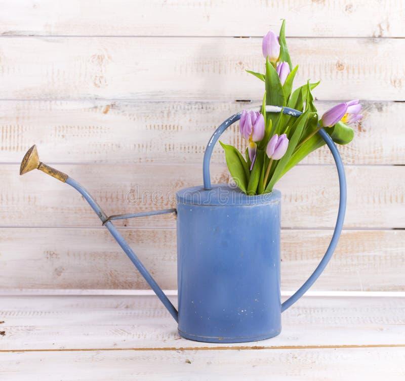 Bidon d'arrosage avec des tulipes photo libre de droits