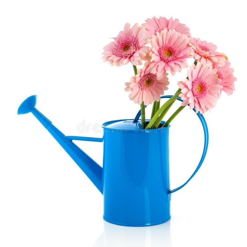Bidon d'arrosage bleu avec les fleurs roses image libre de droits