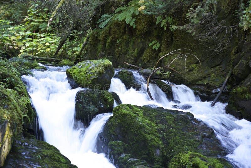 Bieżącej wody bujny zieleni roślinność fotografia royalty free
