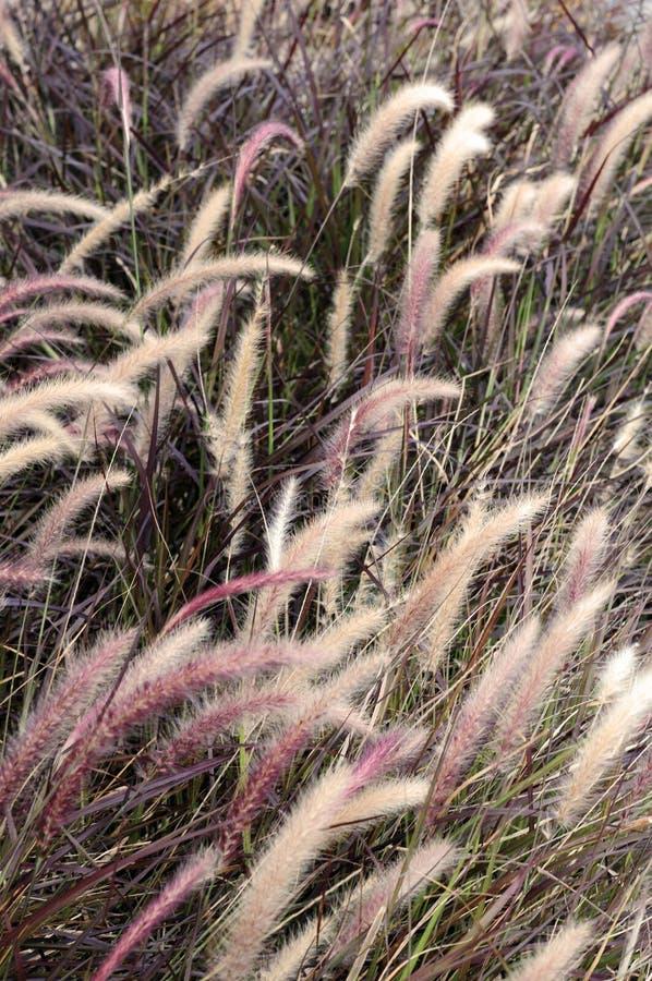 Bieżący łąkowy natury tło zdjęcie stock