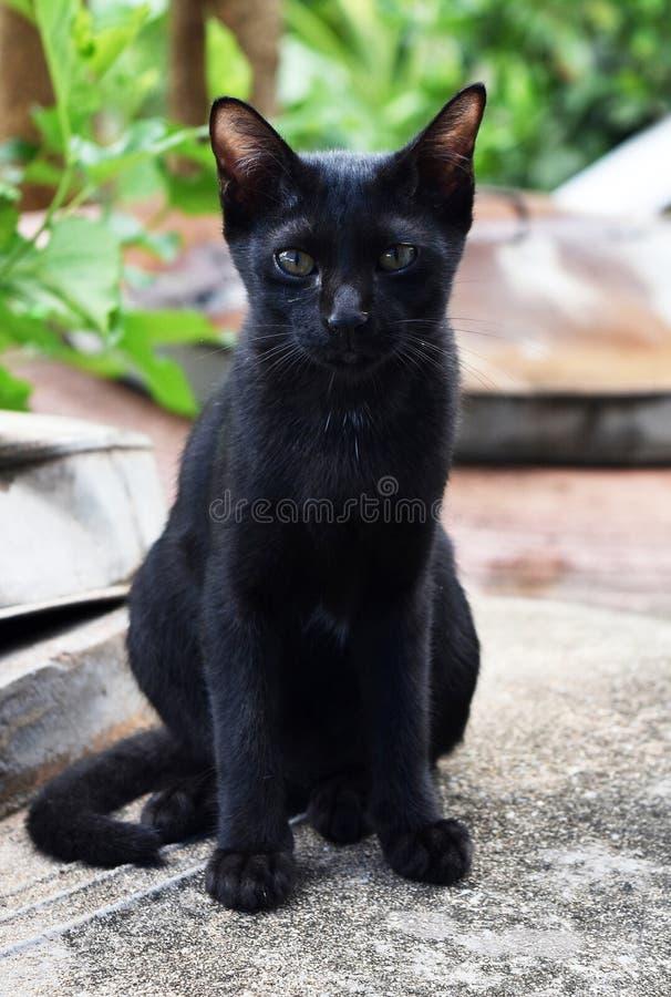 Biedny bezdomny czarnego kota obsiadanie na brudnym zmielonym czekaniu niektóre jedzenie obraz stock