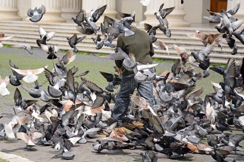 Biednych człowieków żywieniowi gołębie obraz royalty free