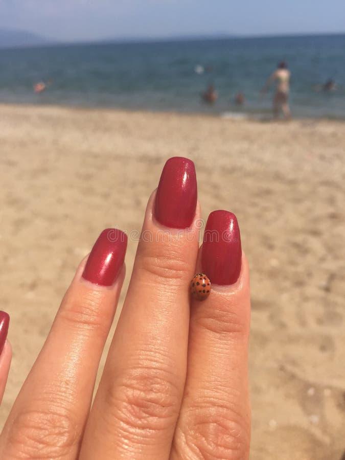 Biedronka na ręki plaży obrazy stock