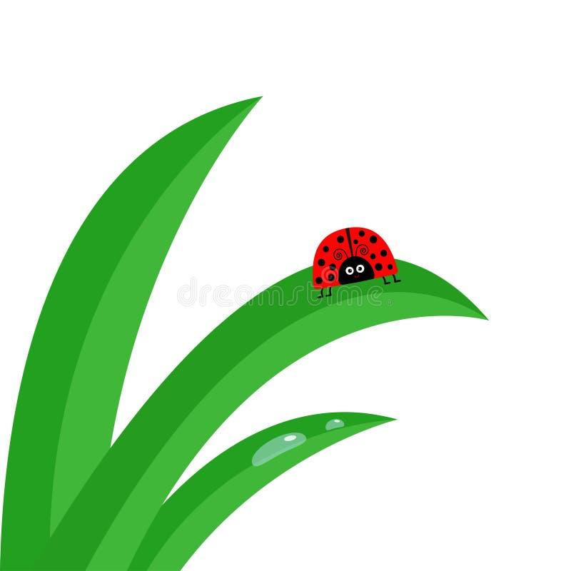 Biedronki ladybird insekt Świeży zielonej trawy badyla zakończenie up Ranek wody kropli set Śliczny kreskówki dziecka charakter O royalty ilustracja