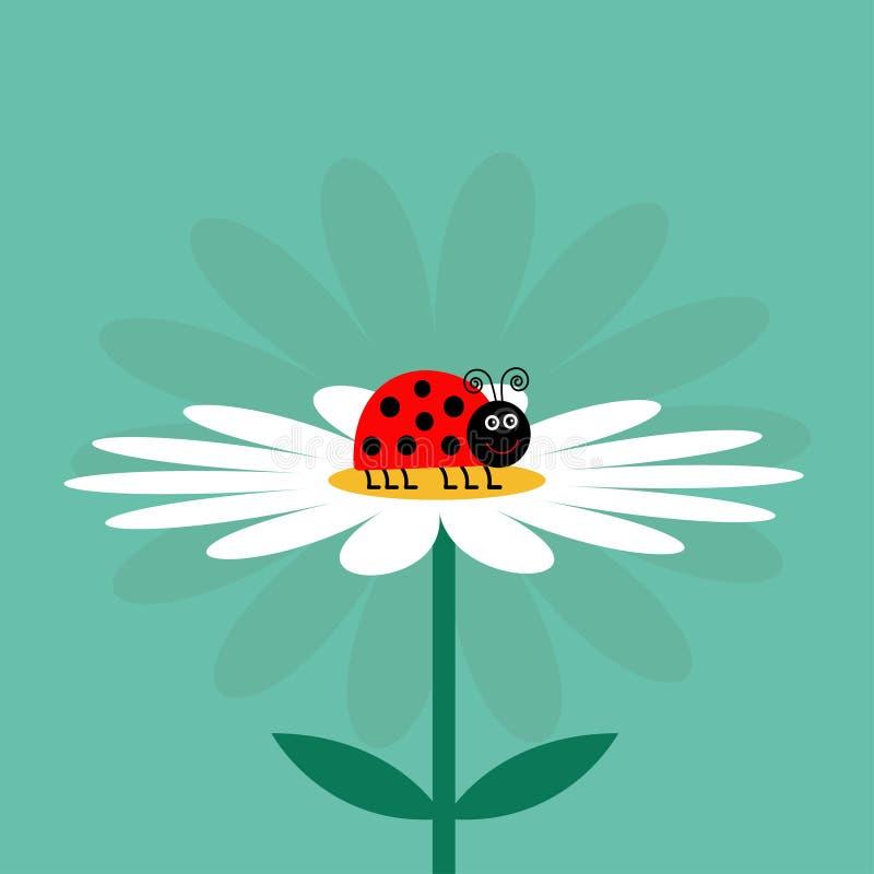 Biedronki ladybird insekt Białej stokrotki chamomile Śliczna dorośnięcie kwiatu rośliny kolekcja grunge tła miłości księgi karty  royalty ilustracja