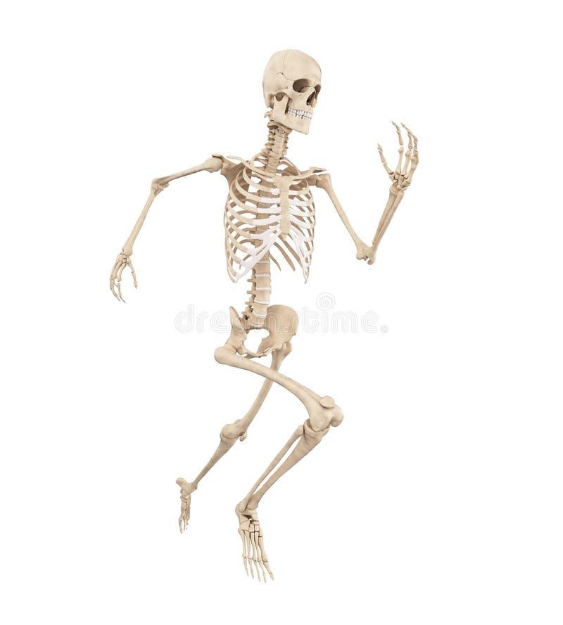 Biegacz kości royalty ilustracja