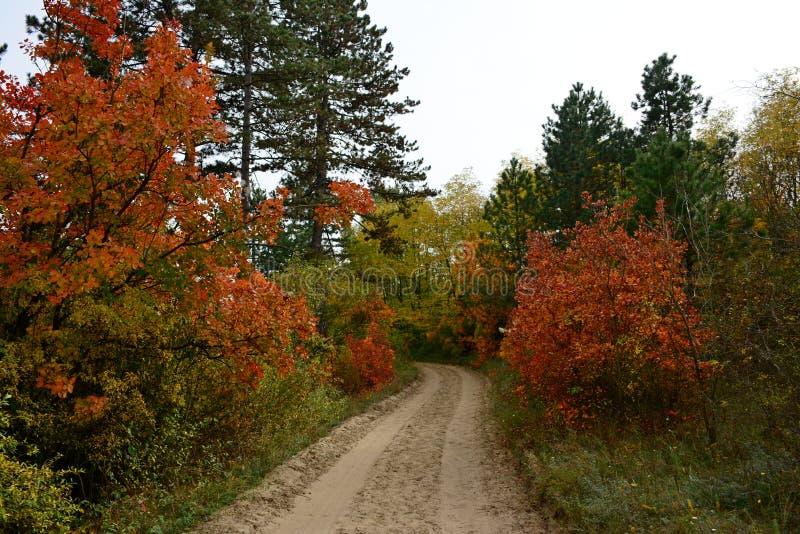 Biegen Sie am roten Baum nach links ab stockfoto