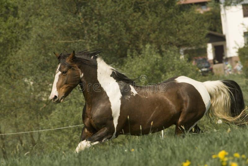 biegnij farby koń. obraz royalty free