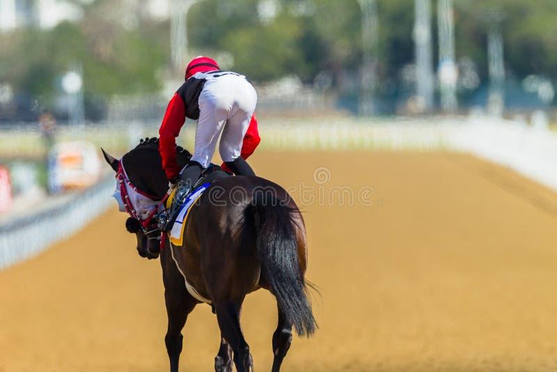 Biegowego konia dżokeja ślad zdjęcia royalty free