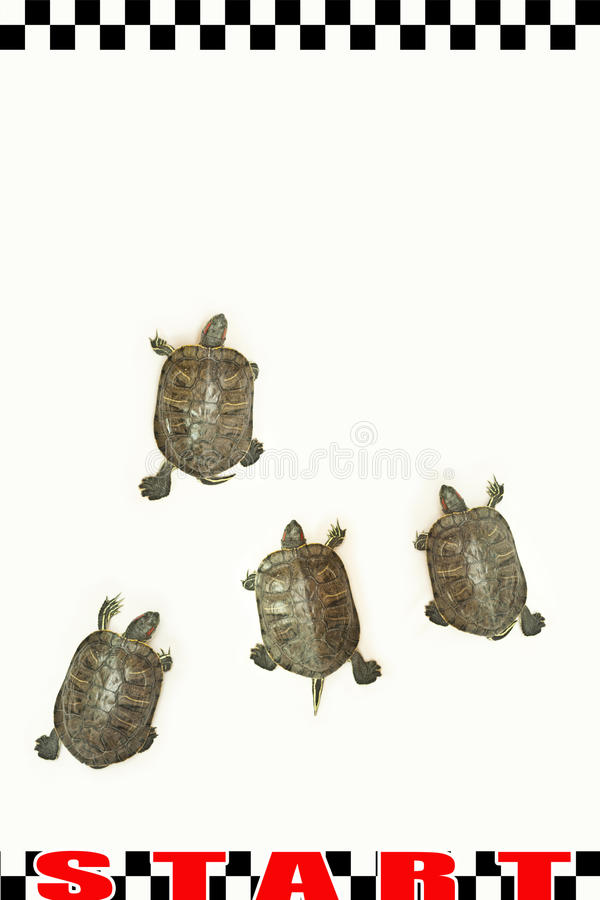 biegowy żółw zdjęcie stock
