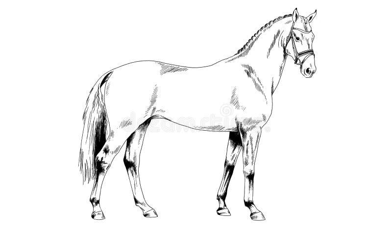 Biegowy koń bez nicielnicy rysującej w atramencie ręką obrazy stock