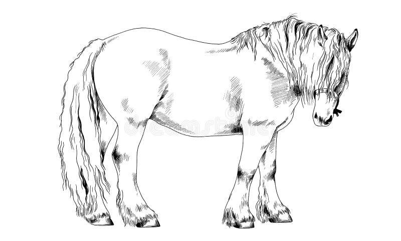 Biegowy koń bez nicielnicy rysującej w atramencie ręką obraz royalty free