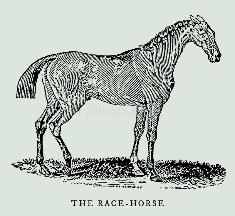 Biegowy koń w profilowym widoku ilustracja royalty ilustracja