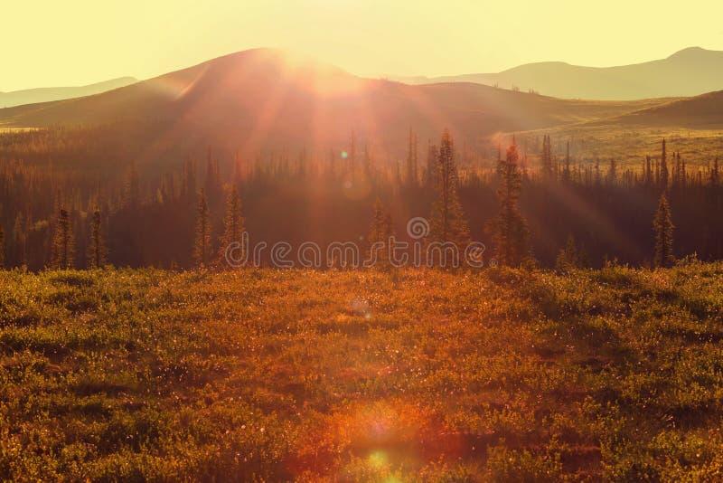 Biegunowa tundra zdjęcie stock