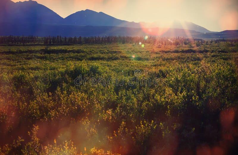 Biegunowa tundra fotografia royalty free