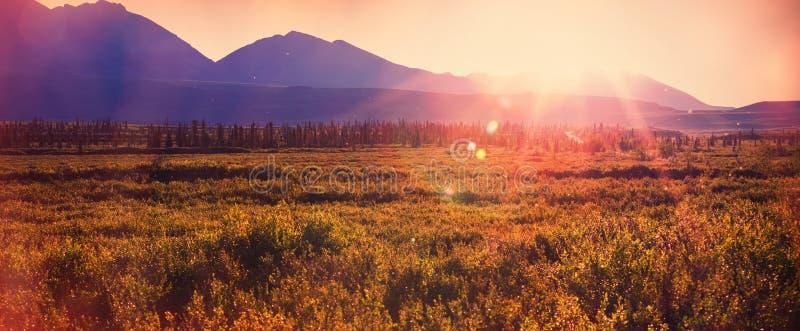 Biegunowa tundra obrazy royalty free