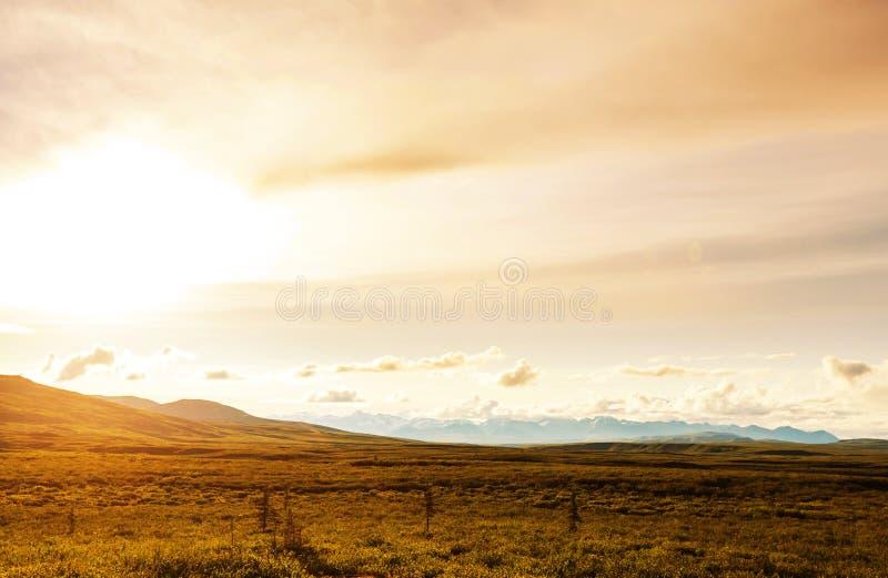 Biegunowa tundra obraz stock