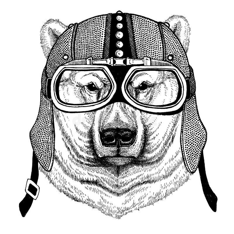 Biegunowy białego niedźwiedzia Zwierzęcy jest ubranym motocykl, aero hełm Rowerzysta ilustracja dla koszulki, plakaty, druki ilustracja wektor