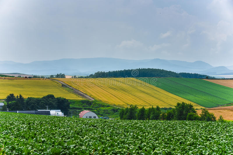 BIei农业区域 免版税库存图片